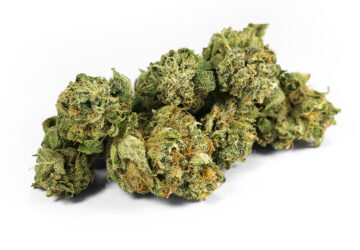 Kush Candy *smalls* by Fresh Flower Vibes